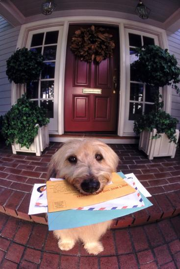 Dog Holding Mail-DLILLC-Photographic Print