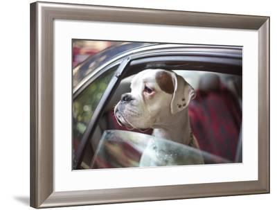 Dog in a Car- aerogondo2-Framed Photographic Print