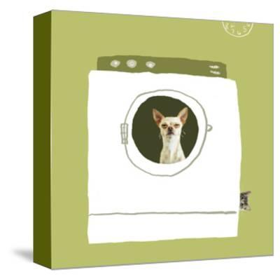 Dog in Dryer