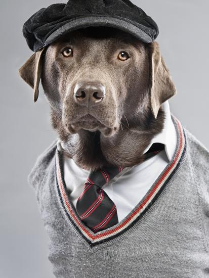Dog in sweater and cap-Justin Paget-Photographic Print