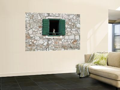 Dog in Window of House in Stari Grad Village-Will Salter-Giant Art Print
