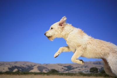 Dog Leaping-DLILLC-Photographic Print