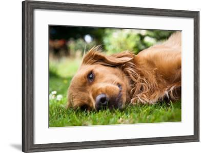 Dog Lieing on its Side Looking into the Camera-Sam Chadwick-Framed Photographic Print