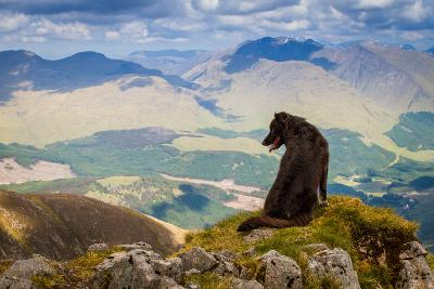 Dog Looking at Epic View from Scottish Munro, Ben Starav.-Chris G Walker-Photographic Print