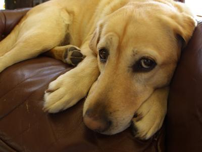 Dog Lying Down-Bruce Ando-Photographic Print