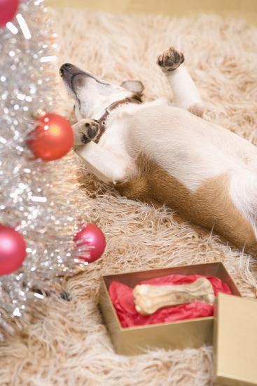 Dog Lying on Rug by Christmas Tree--Photographic Print