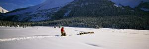 Dog Musher and Sled Dog Team on Snow-Covered Trail, Chugach Mountains, Alaska, USA