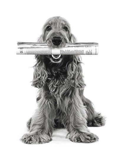 Dog News-Jean-Michel Labat-Art Print