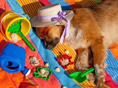 Dog On Holidays- sinnawin-Photographic Print