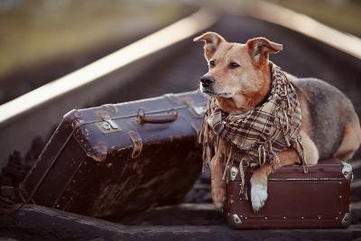 Dog on Rails with Suitcases.-AZALIA-Photographic Print