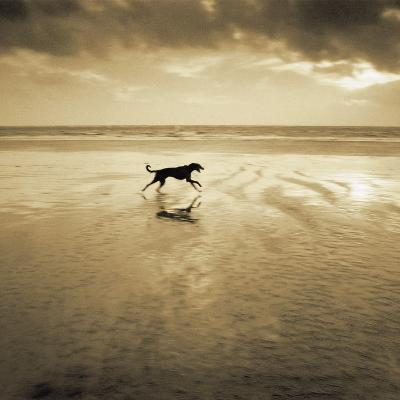Dog on the Beach, West Wittering-Jo Crowther-Giclee Print