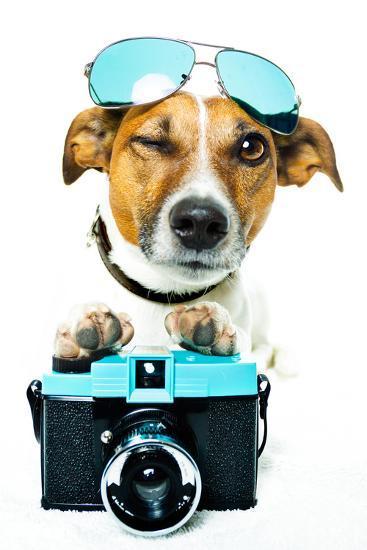 Dog Photo Camera-Javier Brosch-Photographic Print