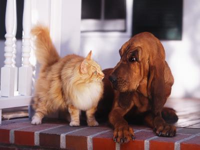 Dog Raising Eyebrow at Cat-DLILLC-Photographic Print