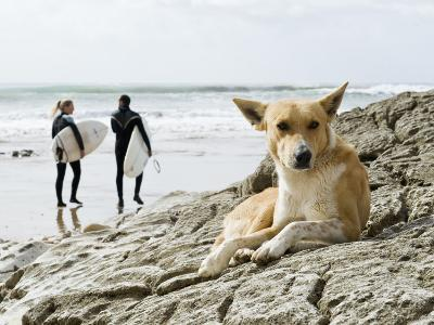 Dog Resting and Surfers Walking Along Beach at Anchor Point-Christian Aslund-Photographic Print