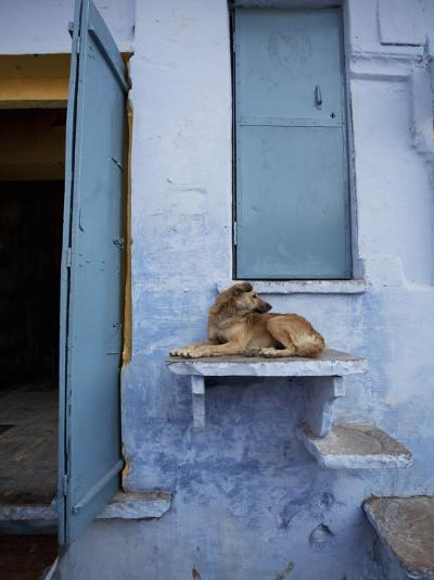 Dog Resting on Step Leading to Doorway-April Maciborka-Photographic Print