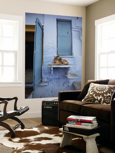 Dog Resting on Step Leading to Doorway-April Maciborka-Giant Art Print