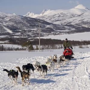 Dog Sledding With Huskies, Tromso Wilderness Centre, Norway, Scandinavia, Europe