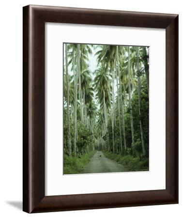 Dog Standing in the Middle of a Palm Tree-Lined Dirt Road-Klaus Nigge-Framed Photographic Print