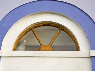 Dog Stands in a Window Above a Door Frame-Michael Melford-Photographic Print