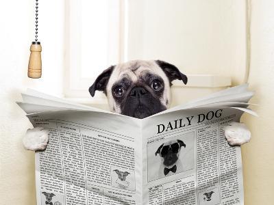 Dog Toilet-Javier Brosch-Premium Photographic Print
