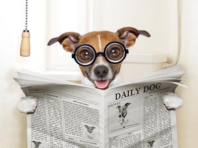 https://imgc.artprintimages.com/img/print/dog-toilet_u-l-q1056hs0.jpg?p=0