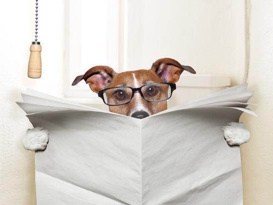Dog Toilet-Javier Brosch-Photographic Print