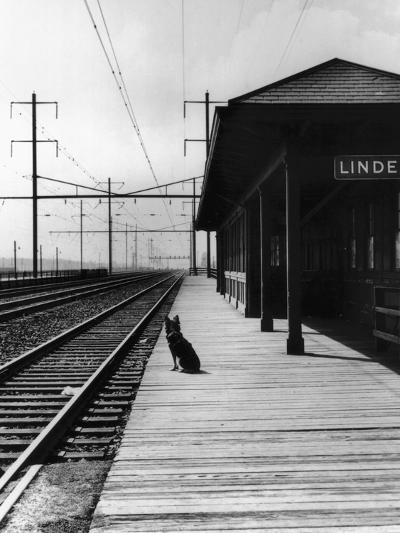 Dog Waiting at Empty Railroad Platform--Photographic Print