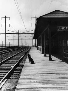 Dog Waiting at Empty Railroad Platform
