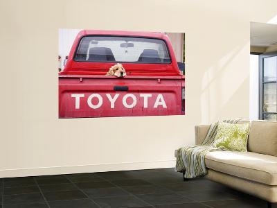 Dog Waiting on Back of Ute-Andrew Bain-Giant Art Print