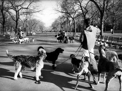 Dog Walkers in Central Park-Alfred Eisenstaedt-Photographic Print