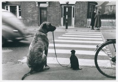 Dog Walking Dog, France