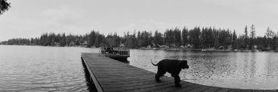 Dog Walking on the Pier, Bellevue, Washington State, USA--Photographic Print