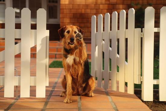 Dog Waving Goodbye from Gate-DLILLC-Photographic Print