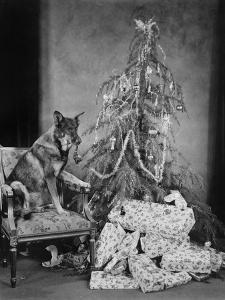 Dog with Christmas Tree and Presents