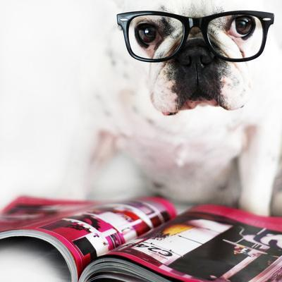 Dog with Glasses-retales botijero-Photographic Print