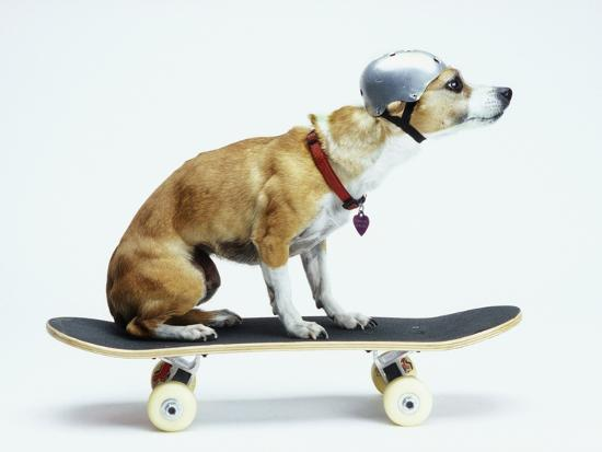 Dog with Helmet Skateboarding-Chris Rogers-Photographic Print