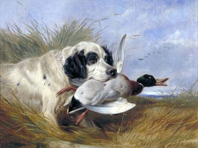 Dog with Wild Duck, 19th Century-Richard Ansdell-Giclee Print