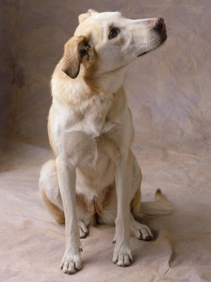 Dog-Howard Sokol-Photographic Print