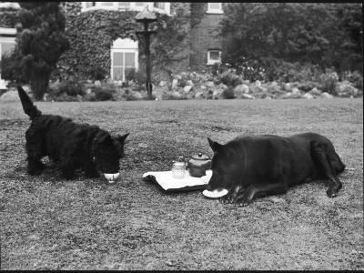 Doggie Afternoon Tea--Photographic Print