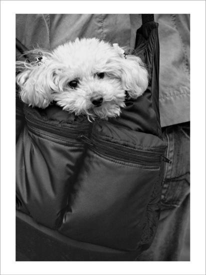 Doggy Bag-Stephen Lebovits-Giclee Print