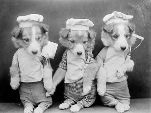 Dogs as Chefs