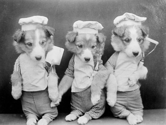 Dogs as Chefs--Photographic Print