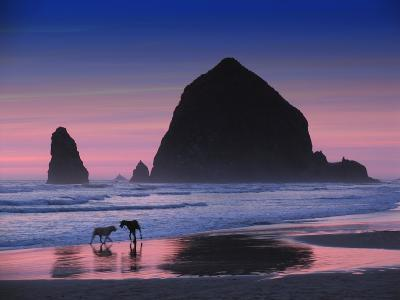 Dogs at Cannon Beach-Jody Miller-Photographic Print