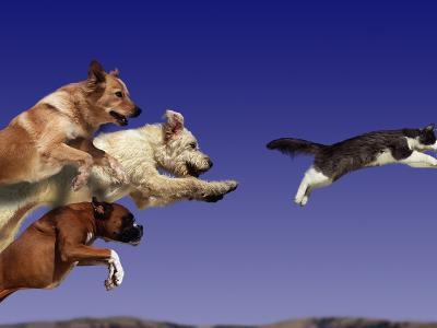 Dogs Chasing Cat-Tim Davis-Photographic Print