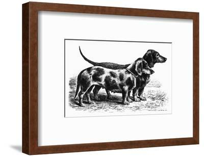 Dogs: Dachshunds