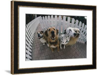 Dogs in Yard-DLILLC-Framed Photographic Print
