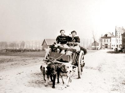 Dogs Pulling Women on a Cart, Antwerp, 1898-James Batkin-Photographic Print
