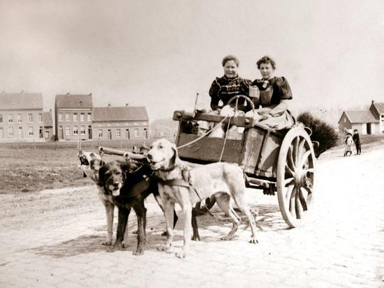 Dogs Pulling Women on a Cart, Antwerp, 1898-James Batkin-Photographic Print