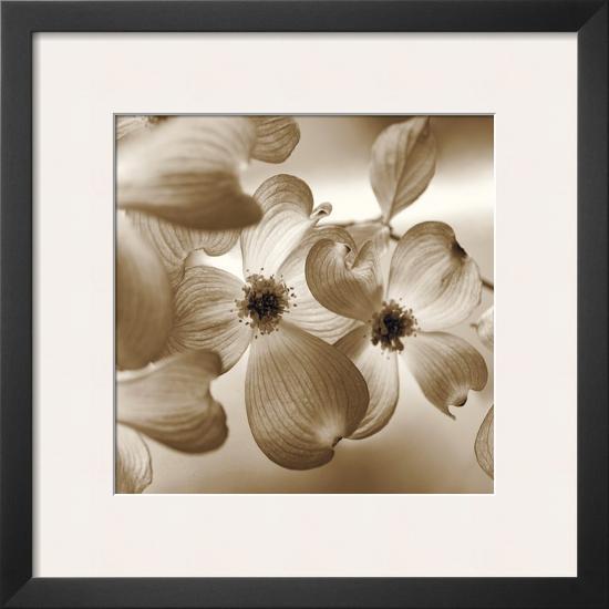 Dogwood-Ann Dahlgren-Framed Art Print