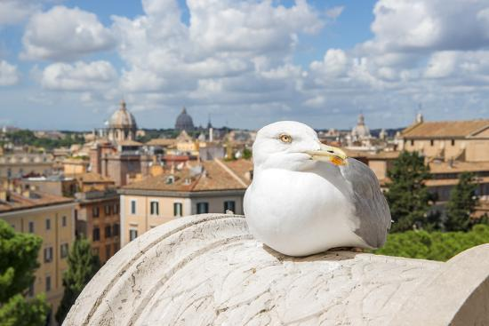 Dolce Vita Rome Collection - View of Seagull-Philippe Hugonnard-Photographic Print
